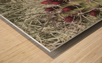 Cactus Flower VP2 Wood print