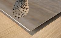 Snowy Owl in flight 6 Wood print