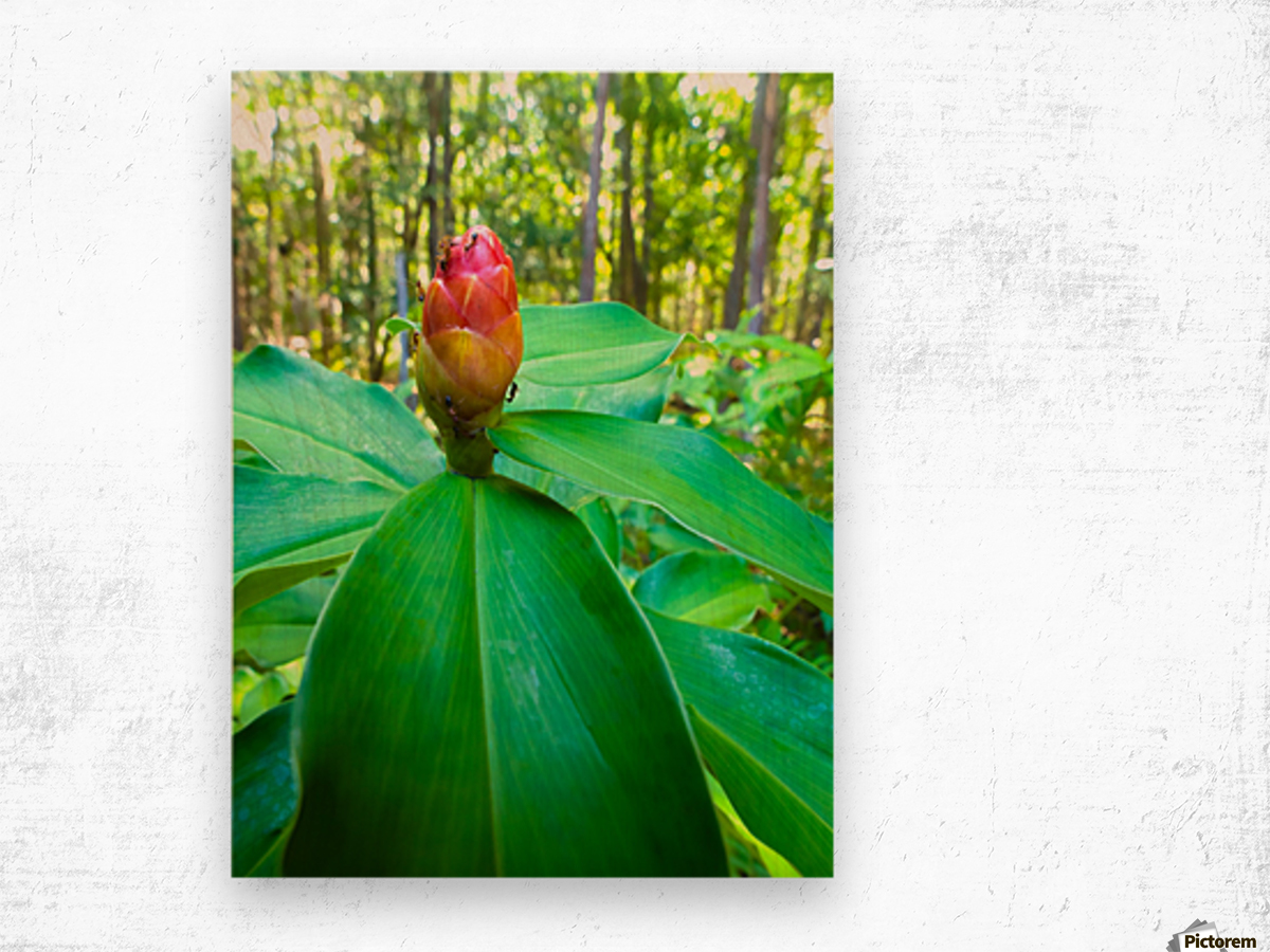 HDR Ants on a ginger flower Wood print