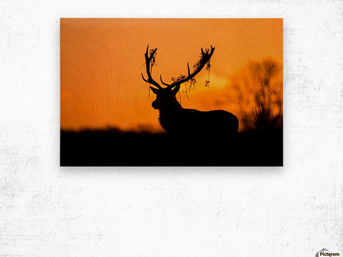 Red Deer Stag Silhouette Wood print