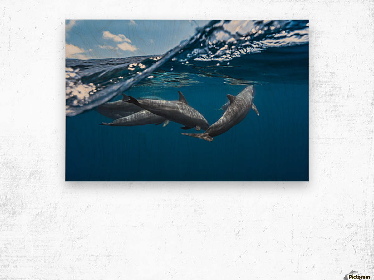 Dolphins Wood print