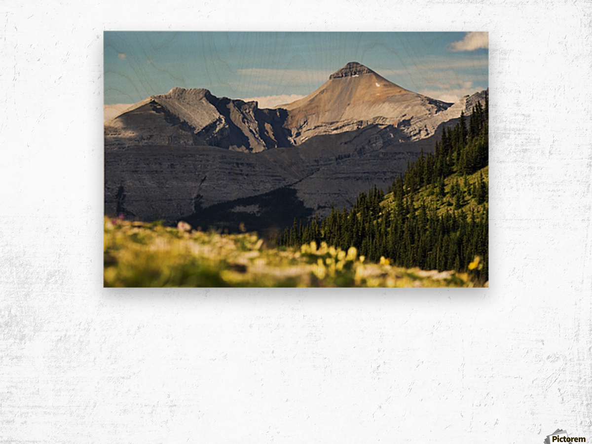 Mountain range with wildflowers on hillside in the foreground and blue sky; Bragg Creek, Alberta, Canada Wood print