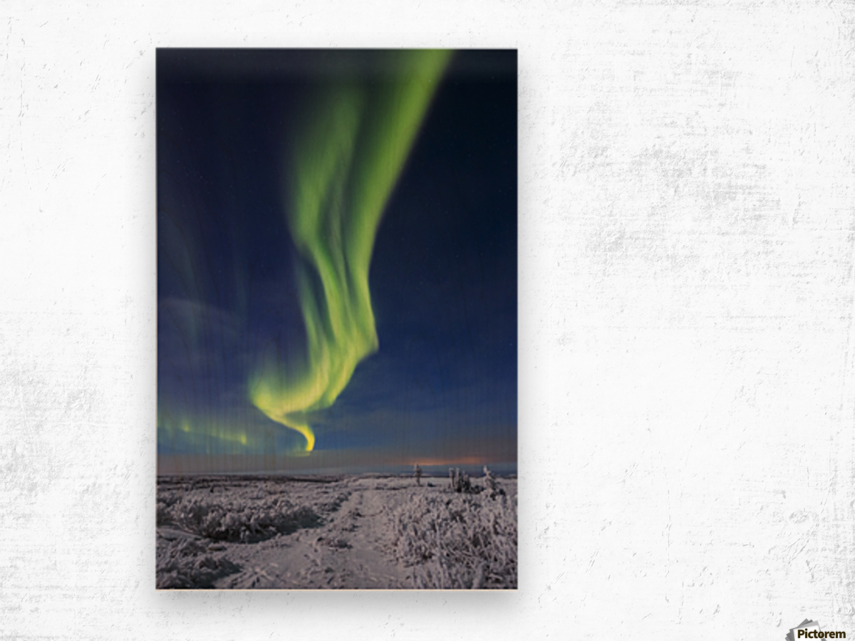 The aurora borealis shines above an ATV trail covered in snow, south of Delta Junction; Alaska, United States of America Wood print