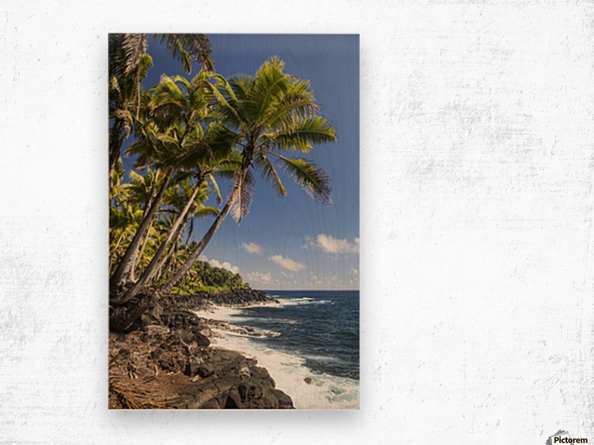 Palm trees along the Puna coastline, near Kalapana; Island of Hawaii, Hawaii, United States of America Wood print