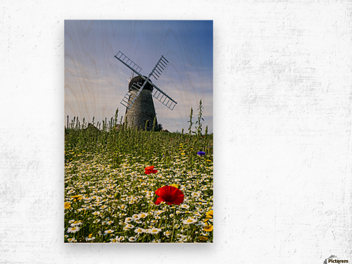 A windmill against a blue sky and cloud with a field of wildflowers in the foreground; Whitburn, Tyne and Wear, England Wood print