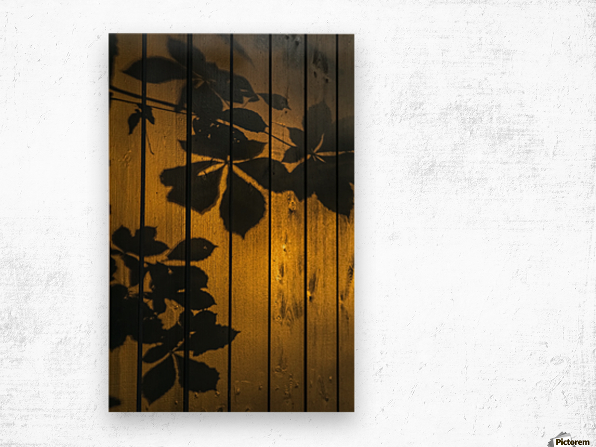 Shadows of tree branches and leaves cast on a wooden fence; Gateshead, Tyne and Wear, England Wood print
