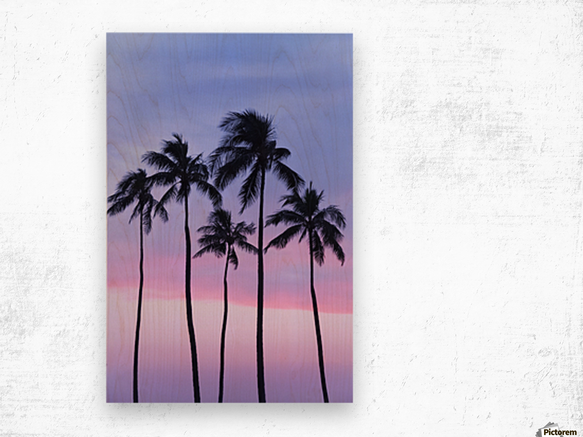 Five coconut palm trees in line with cotton candy sunset behind; Honolulu, Oahu, Hawaii, United States of America Wood print