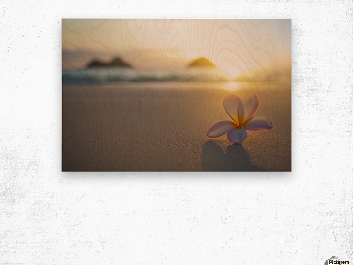 A pink plumeria flower sits on the sand of Lanikai Beach in Kailua with a view of Mokulua twin islands and the ocean at sunset in the distance; Kailua, Oahu, Hawaii, United States of America Wood print