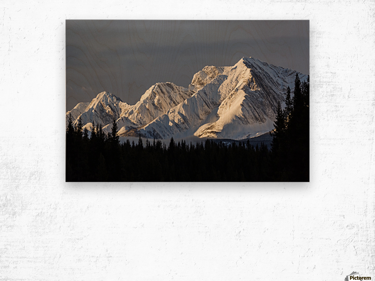 Snow covered mountains with early morning light, silhouetted forest in the foreground, blue sky and clouds; Kananaskis Country, Alberta, Canada Wood print
