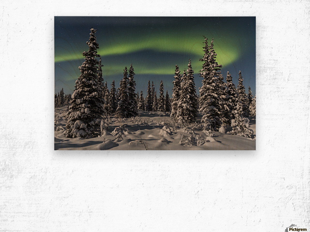 Green Aurora Borealis dances over the tops of snow covered black spruce trees, moonlight casting shadows on a clear winter night, interior Alaska; Gakona, Alaska, United States of America Wood print