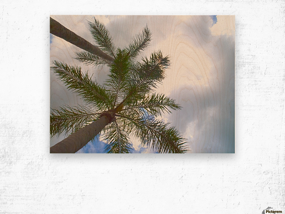 HDR Palm trees looking up against a cloudy sky Wood print