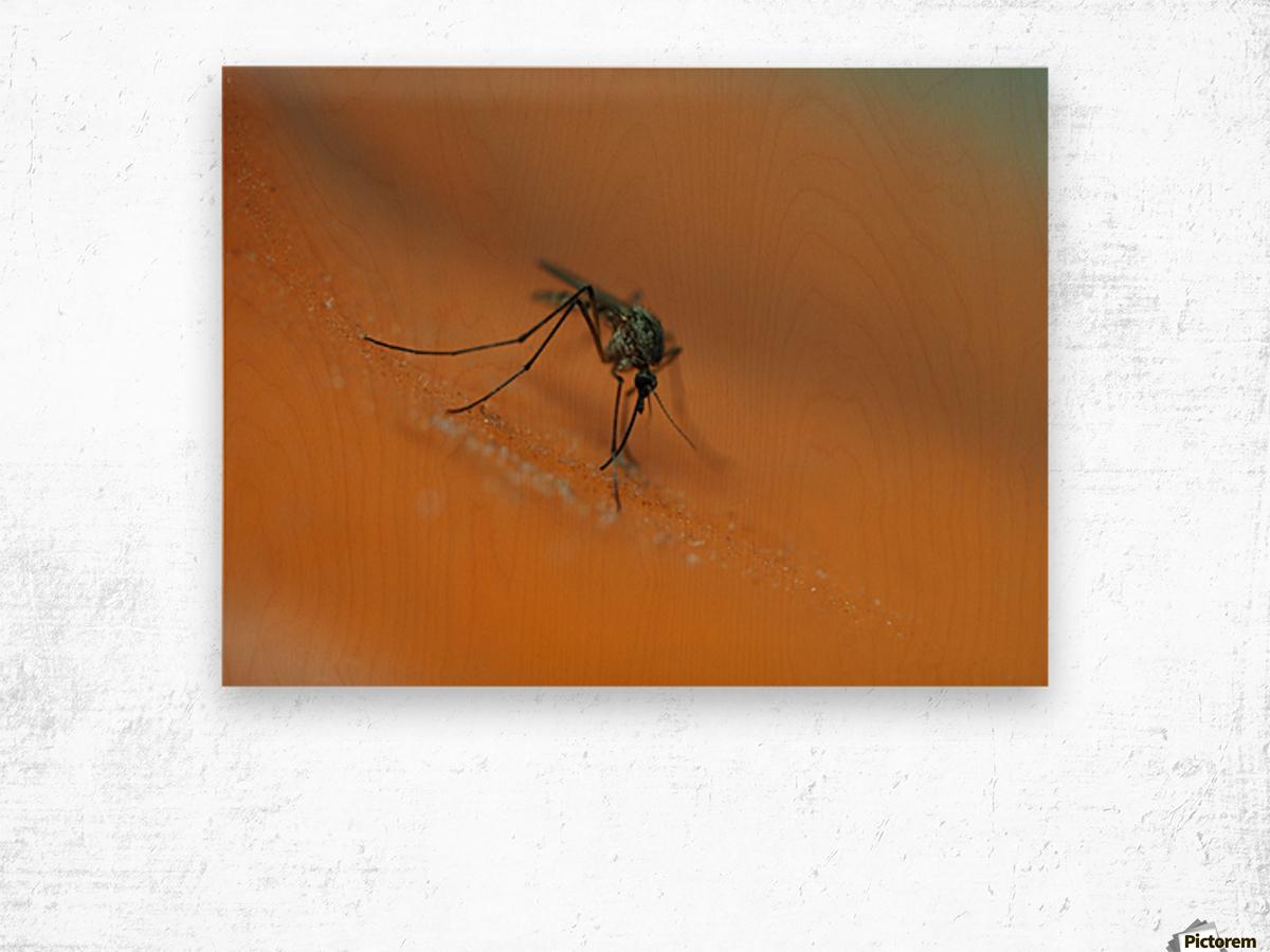Mosquito! Wood print