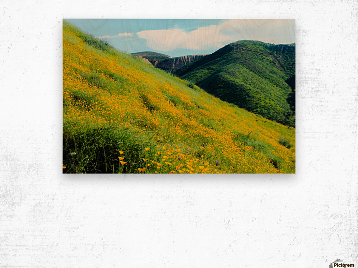 yellow poppy flower field with green leaf and green mountain and cloudy blue sky in summer Wood print