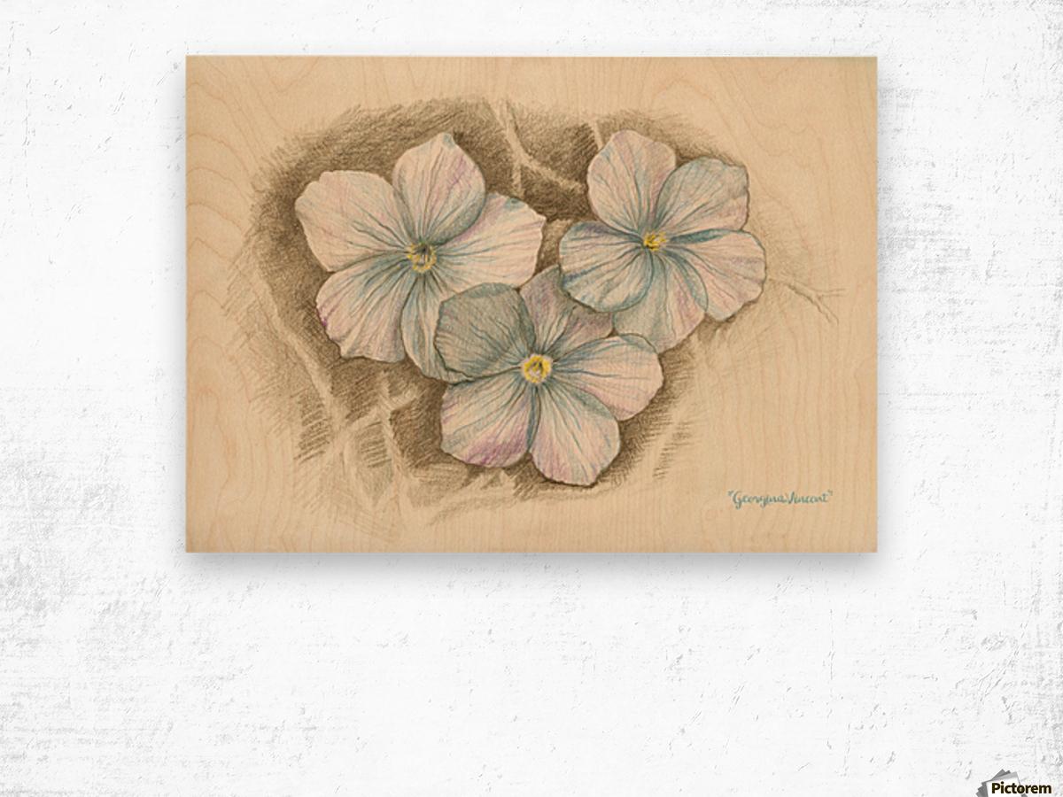 Linum Narbonense Wood print
