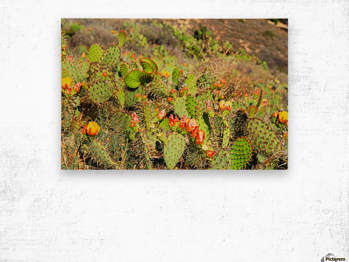 Green Cactus With Red And Yellow Flower Texture Background Timmyla