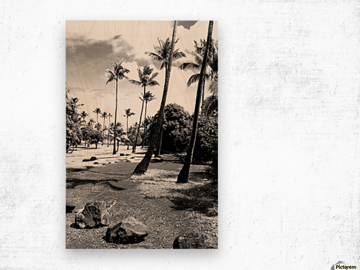 palm tree with cloudy sky in black and white Wood print