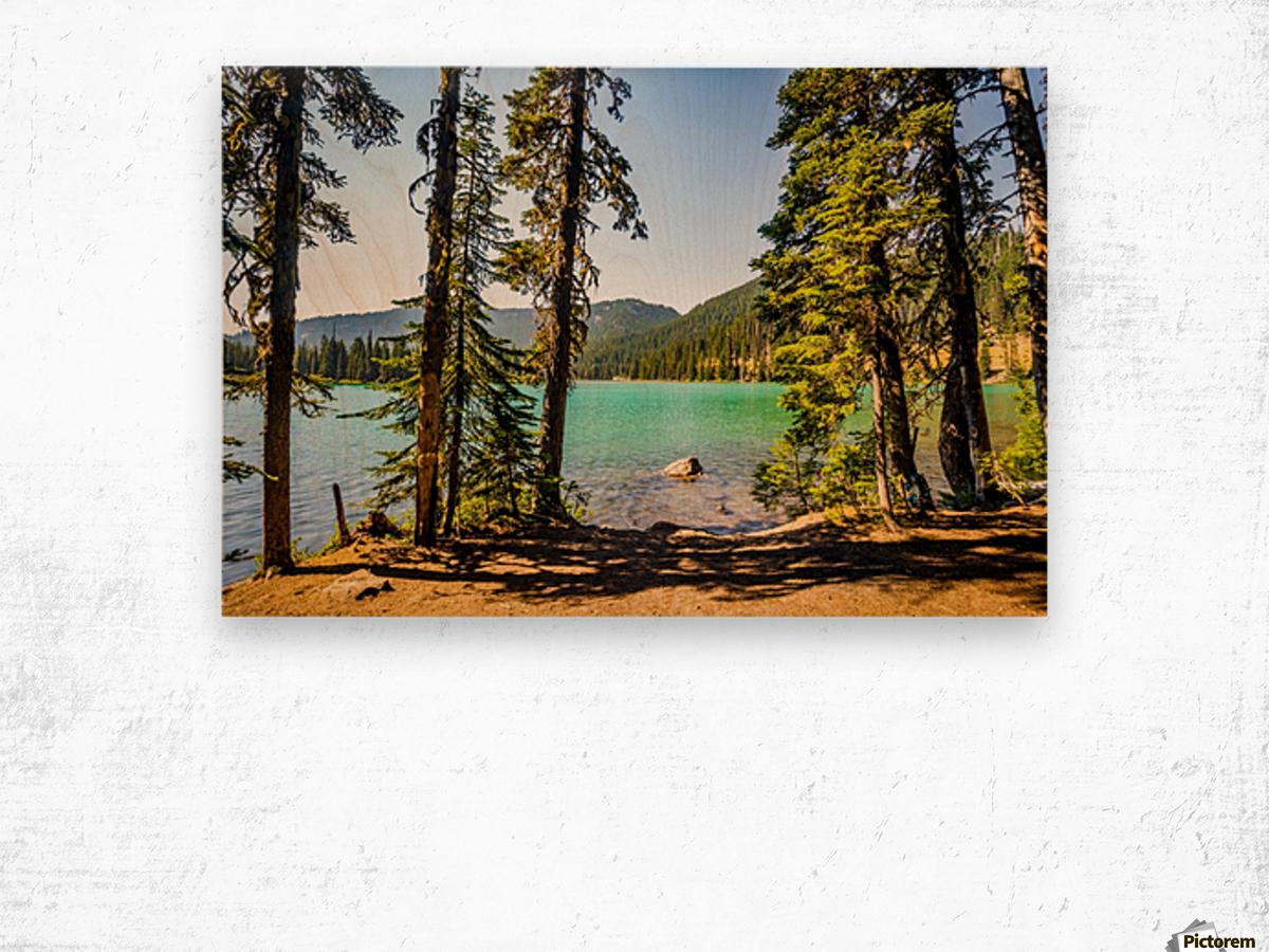 Devil's Lake Wood print