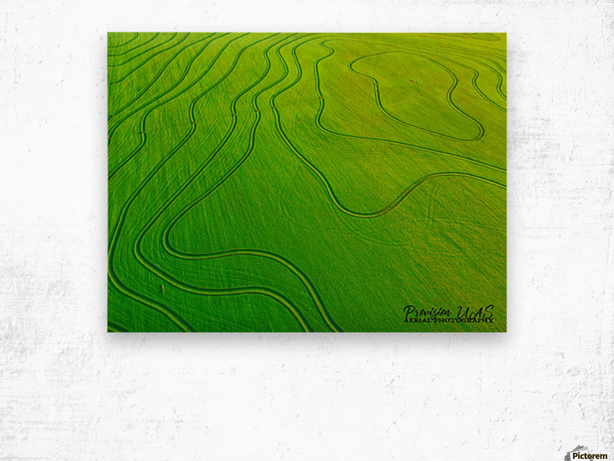 Carlisle, AR | Arkansas Rice Field Wood print