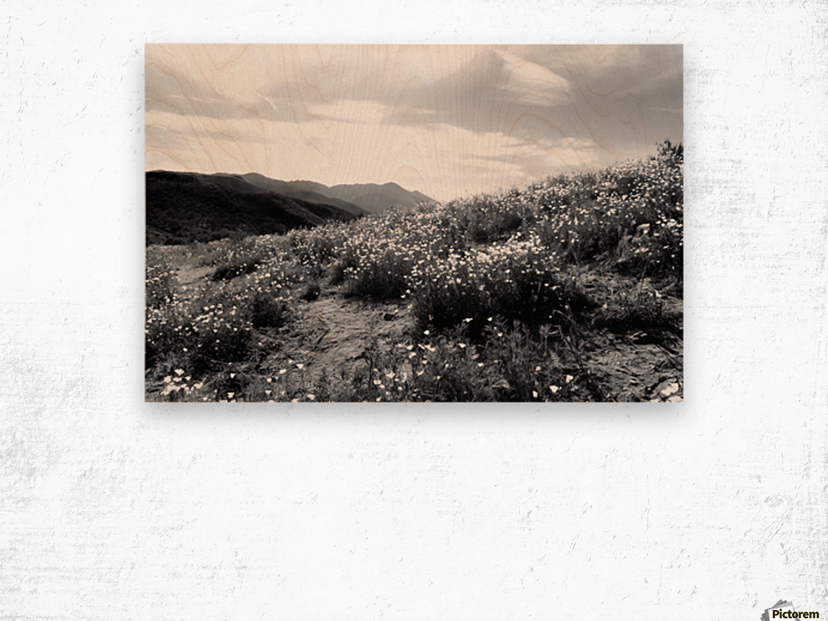 poppy flower field with mountain and cloudy sky in black and white Wood print