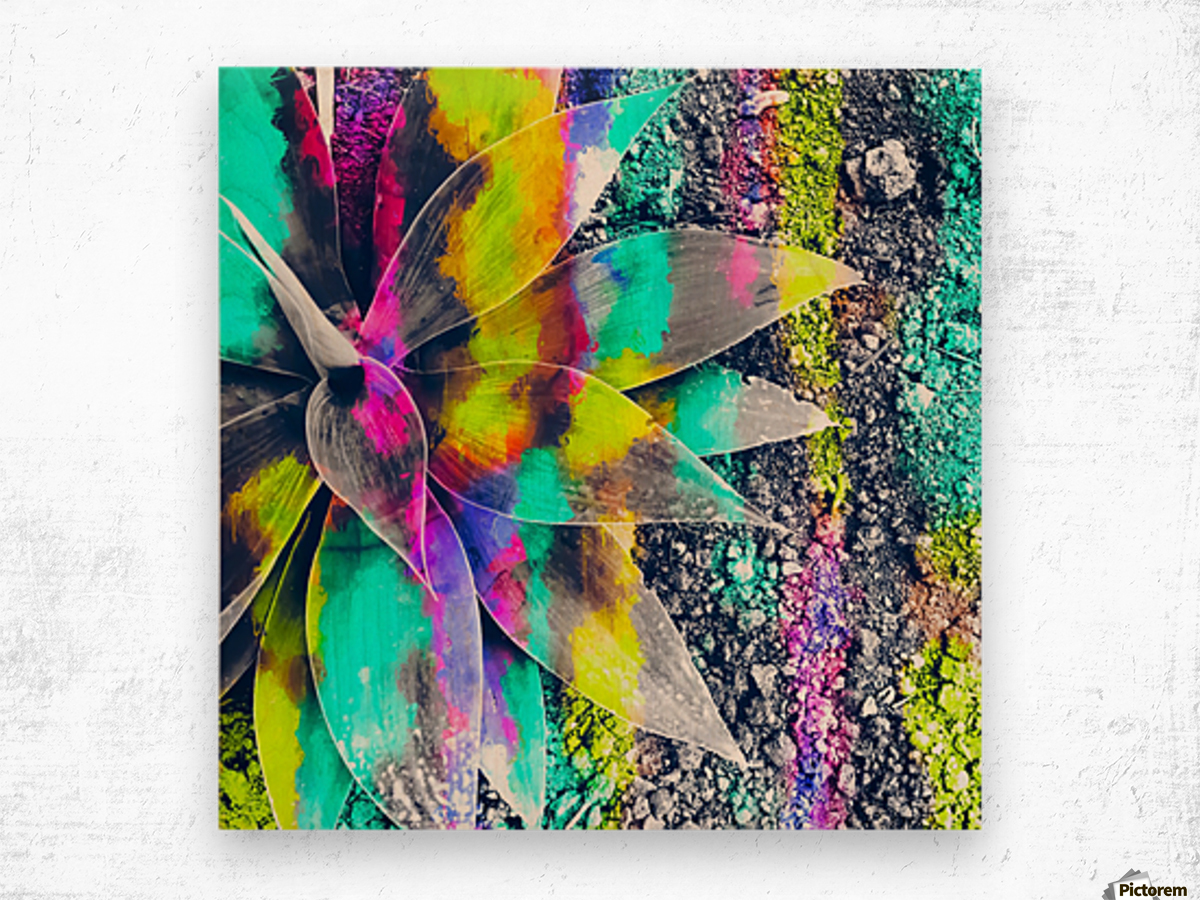succulent plant with painting abstract background in green pink yellow purple Wood print