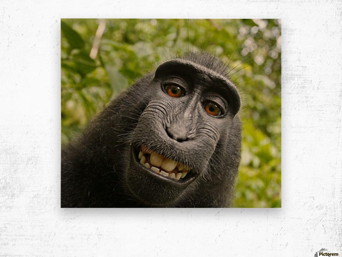 monyet Wood print