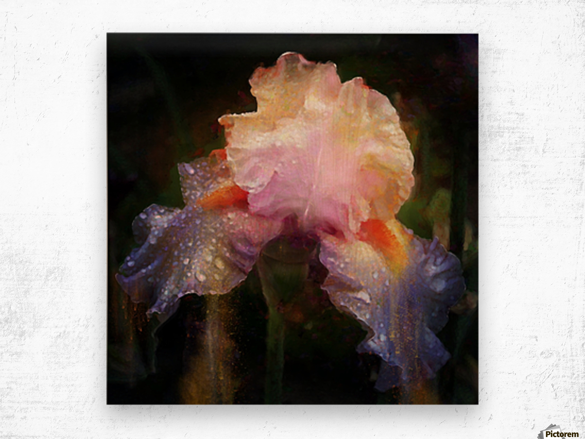 Enchanted Iris   Wood print