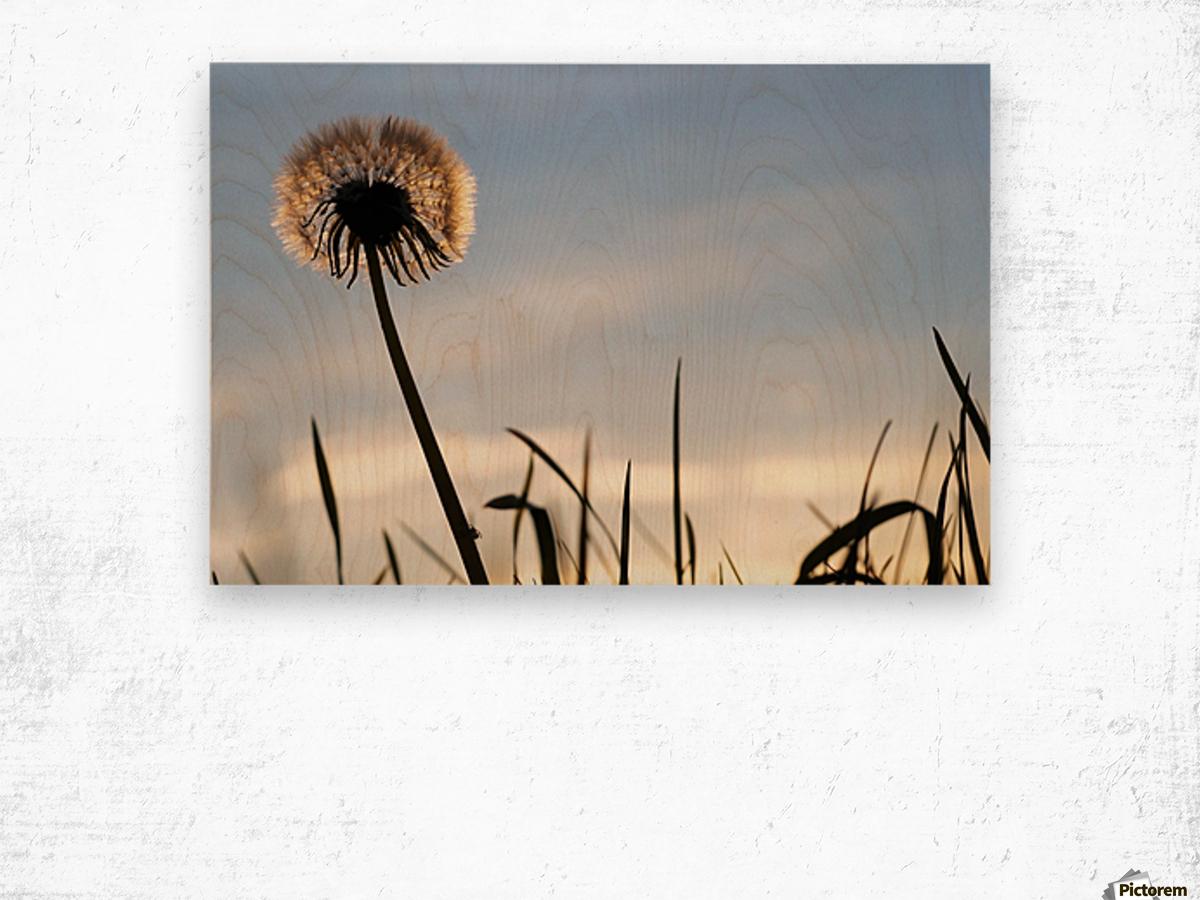 Dandelion Impression sur bois