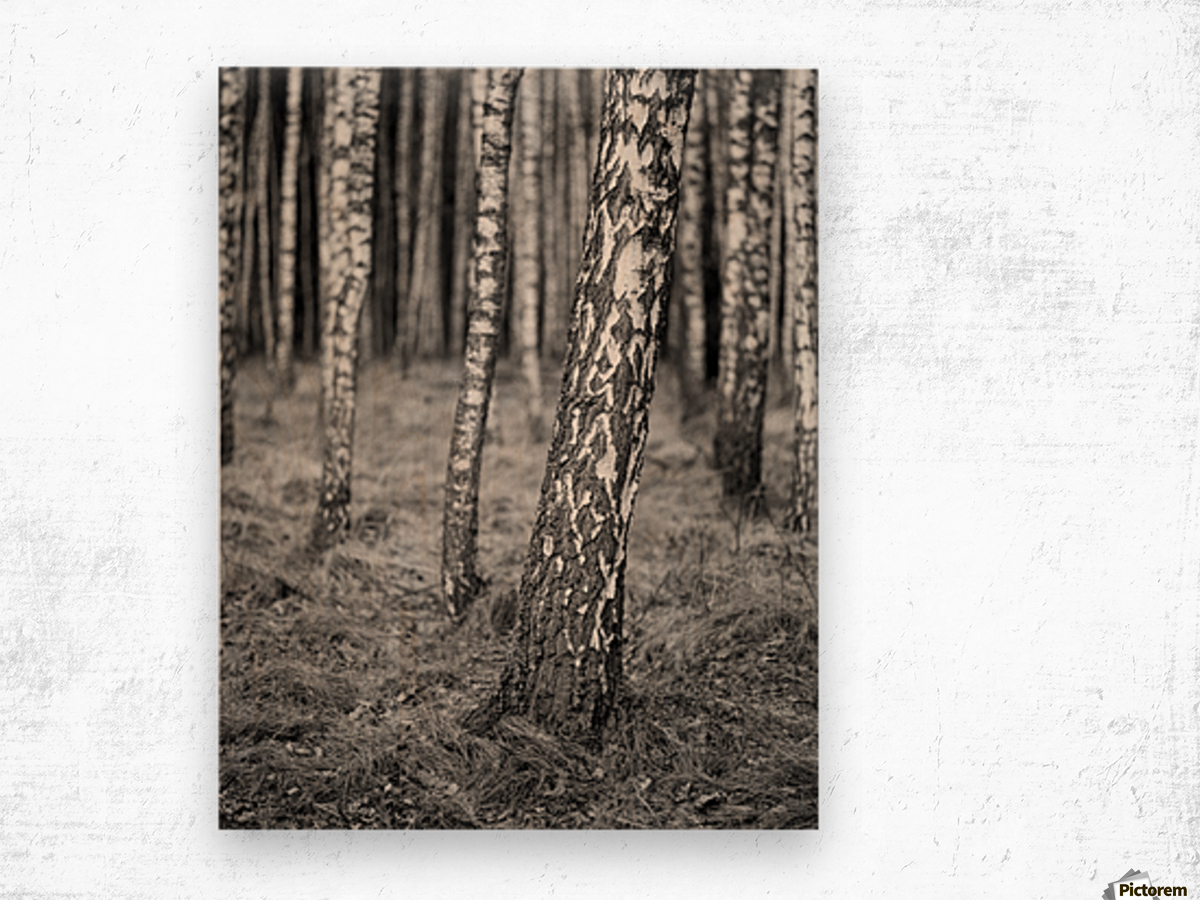 The Birches Wood print