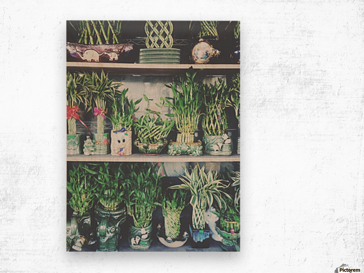 green bamboo plant in the vase pattern background Wood print