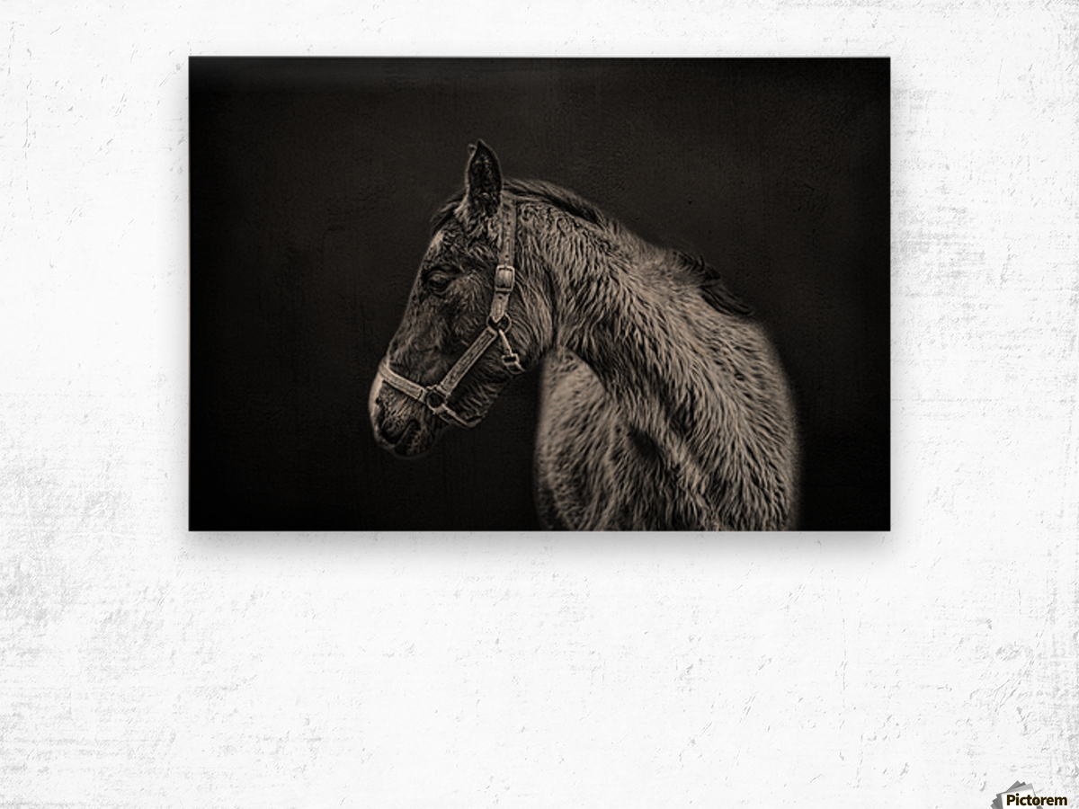 Amish Workhorse Wood print