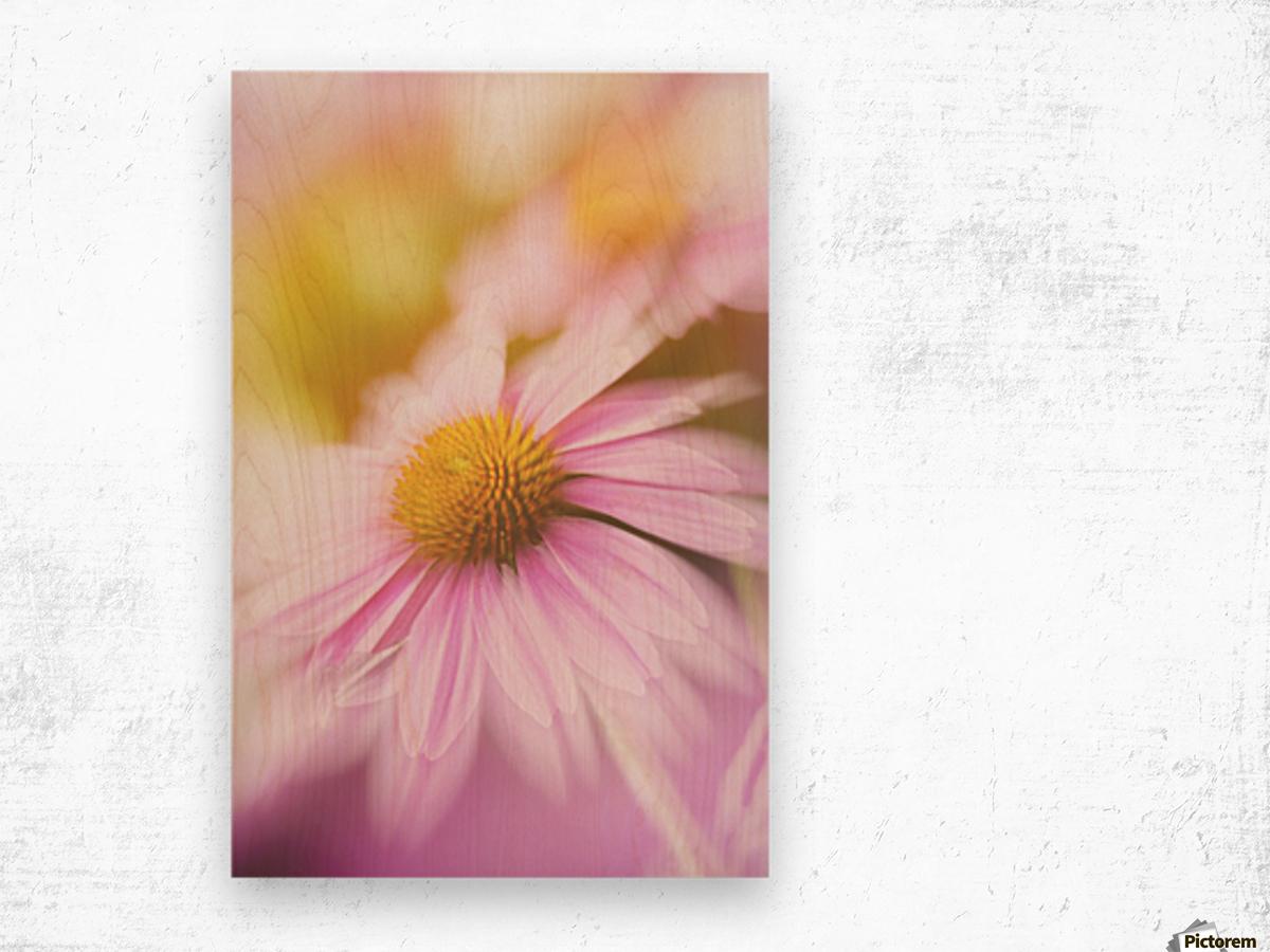 Dreamy Pink Coneflower  Wood print