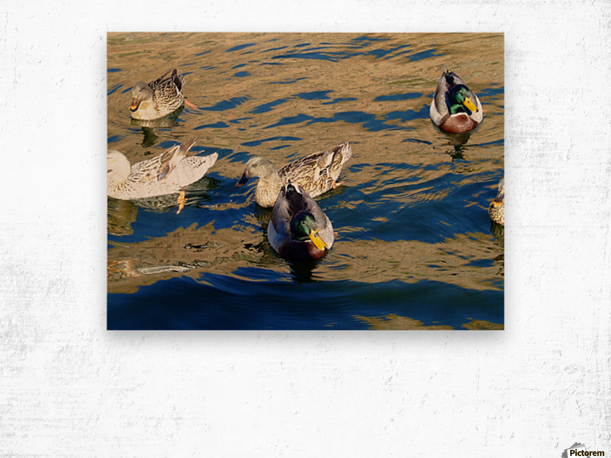 Ducks on Saguaro Lake  Impression sur bois