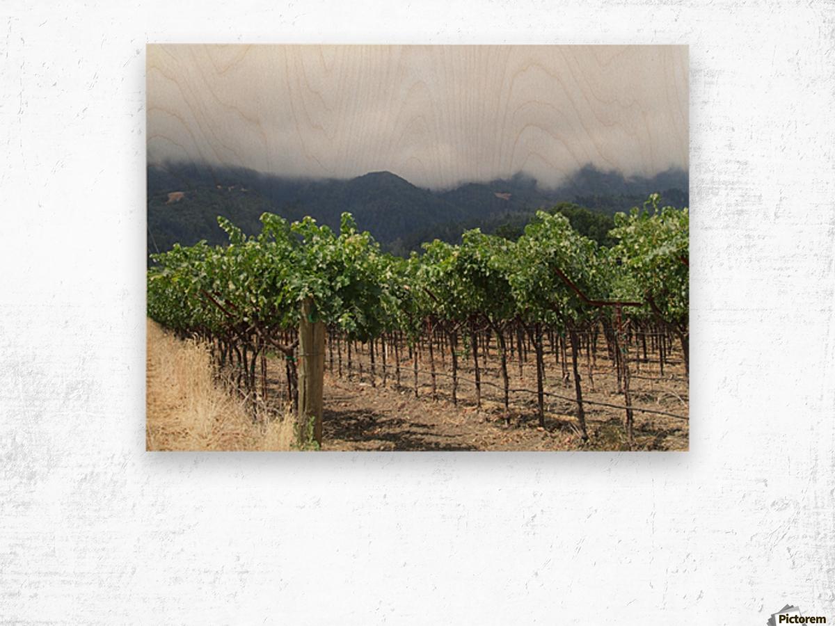 Napa Califoria Grape Vines summer 2007  Wood print