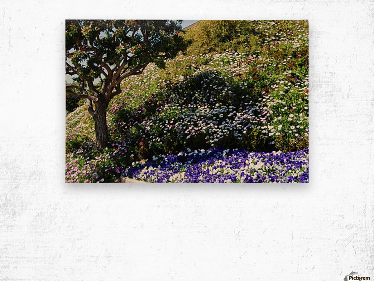 Dana Point Cali flowers on a hill  near sunset  Wood print