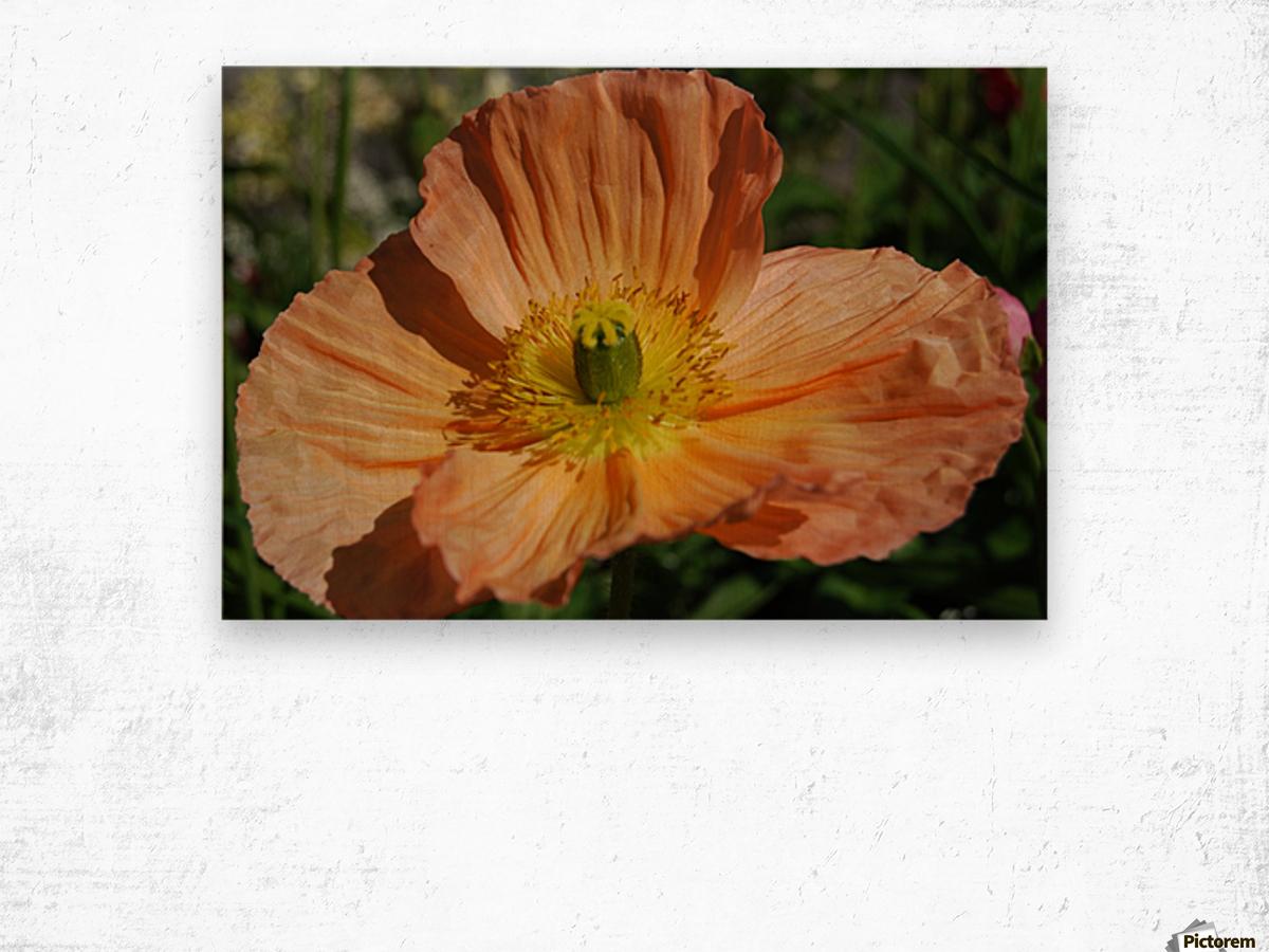 A Poppy Flower Growing Wood print