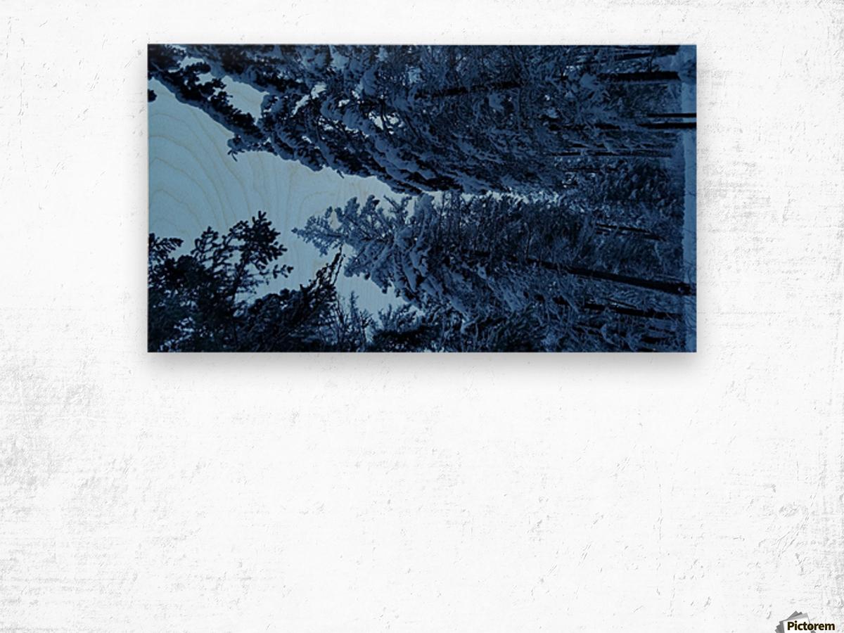 Twilight Woods Wood print