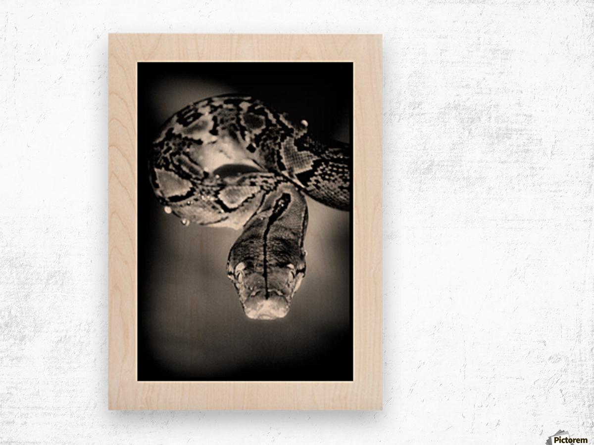 Thailand  Snake Surprise Wood print