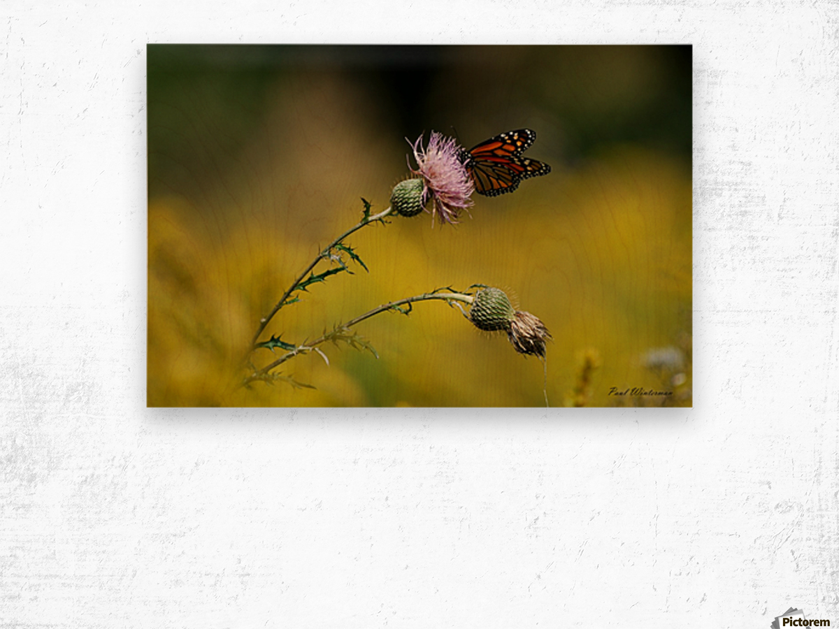 0017- Monarch Meal Wood print