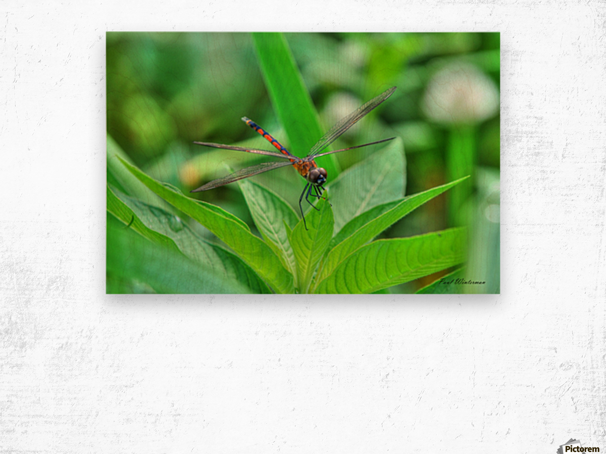 12-4 Orange Dragonfly Wood print