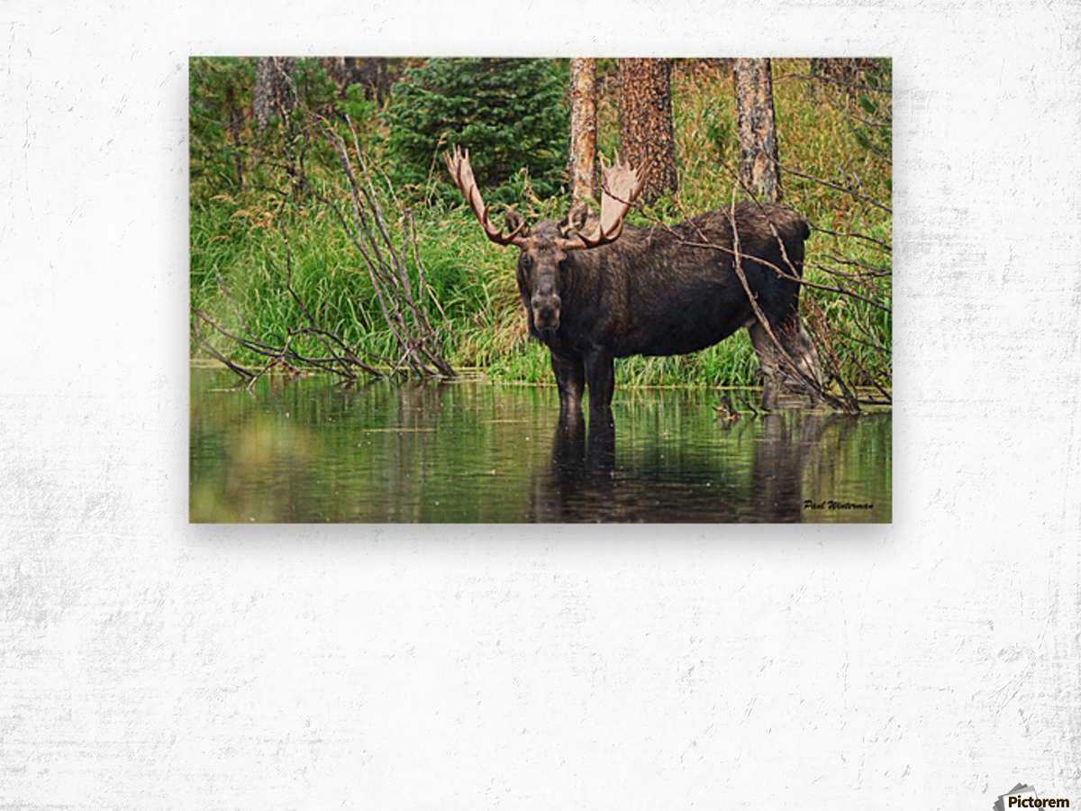 2314- The Look Wood print