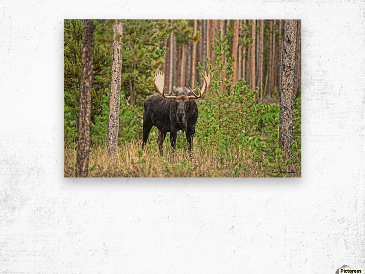 2536-Paddles Wood print