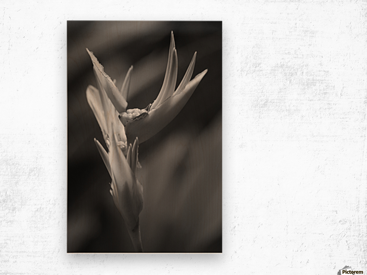 Claw Wood print
