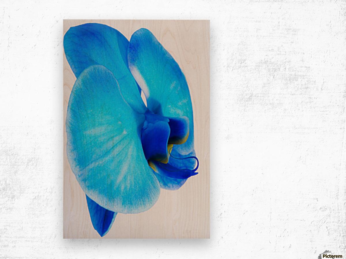 ORCHIDÉE BLEUE Wood print