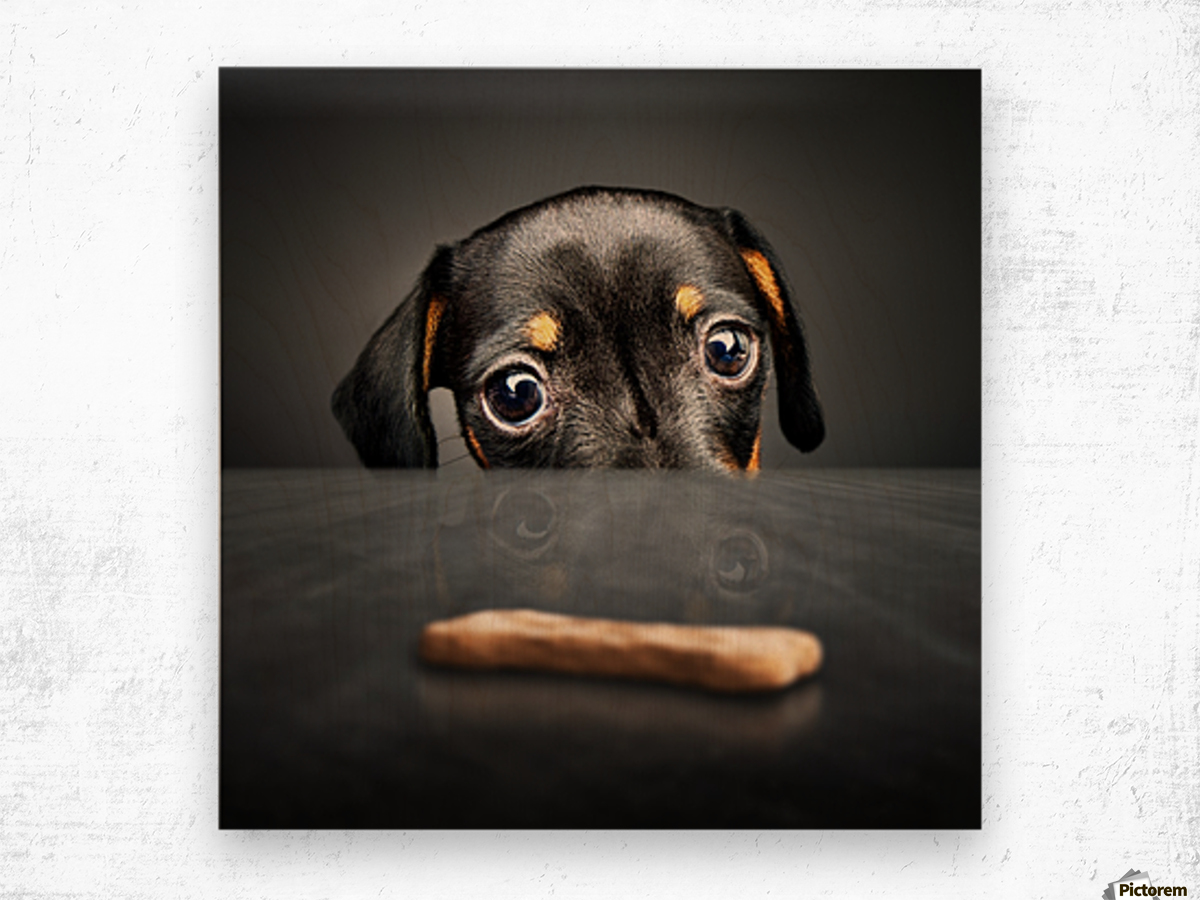 Puppy longing for a treat Wood print