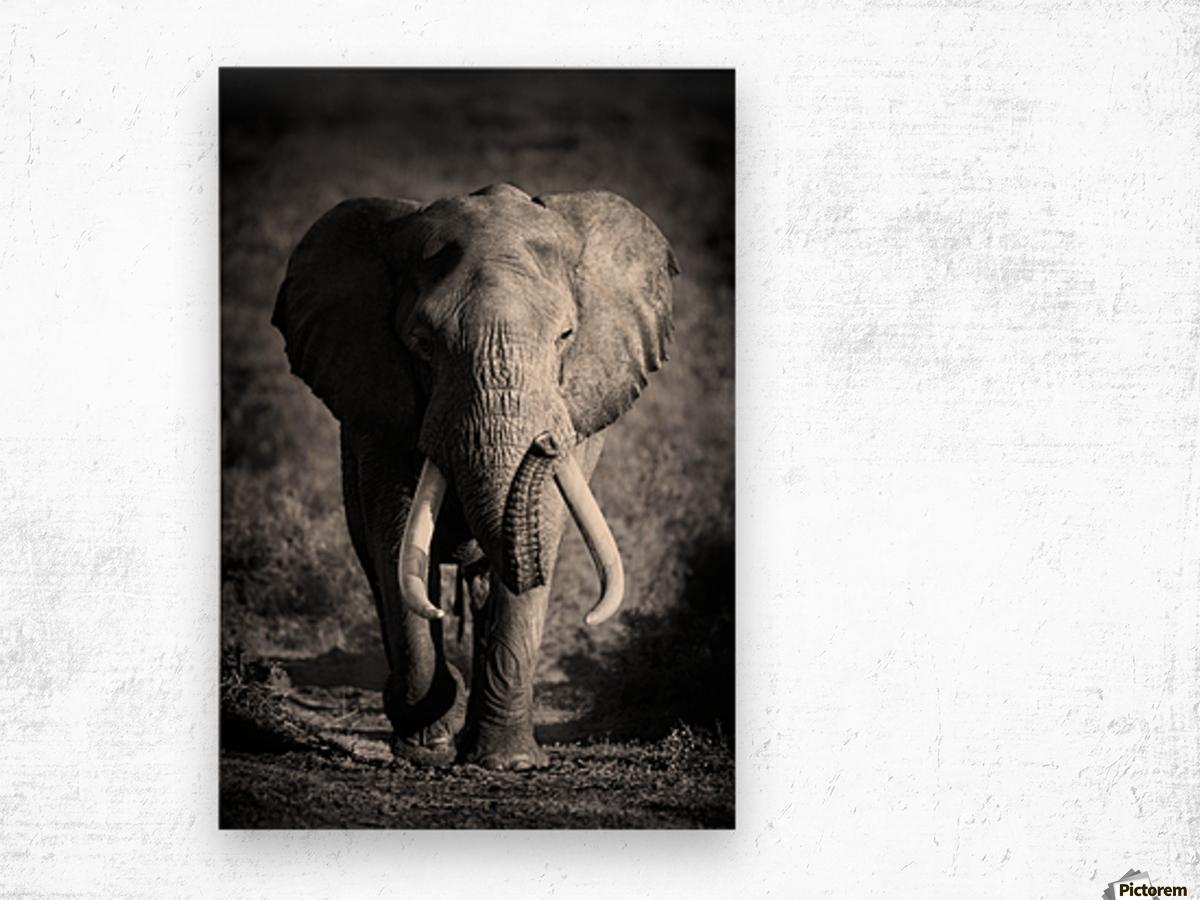Elephant Bull Wood print