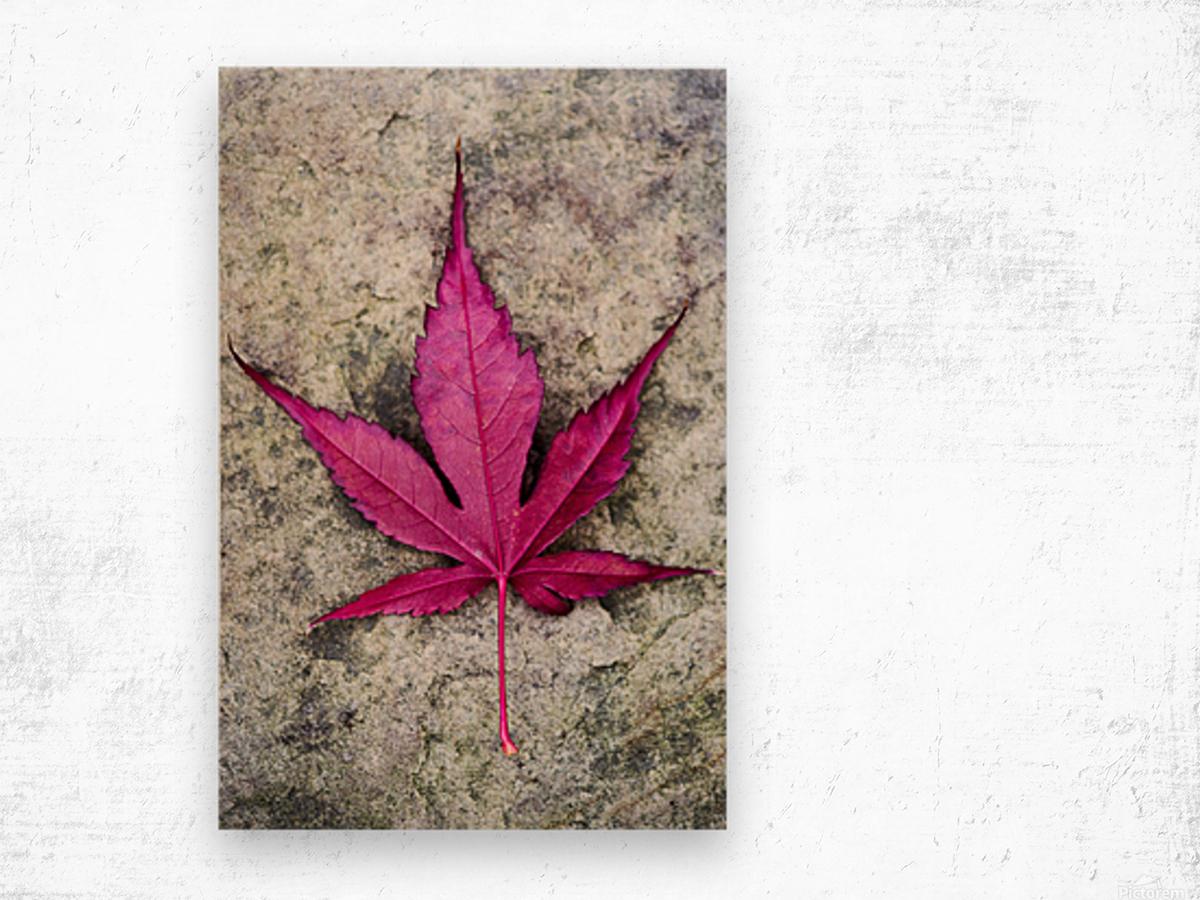 Osakasuki Wood print