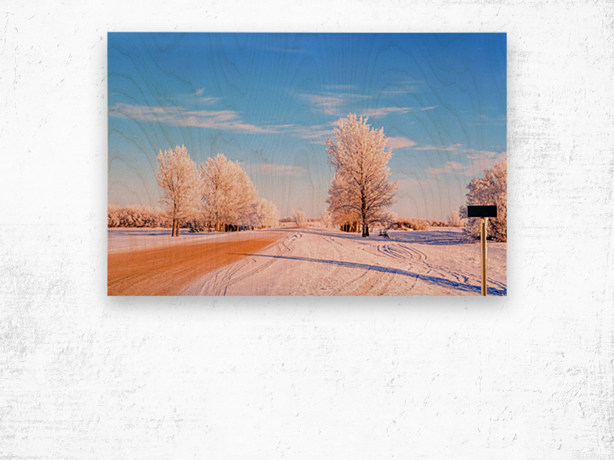 Beautiful, colorful and cold winter with snow and frost Wood print