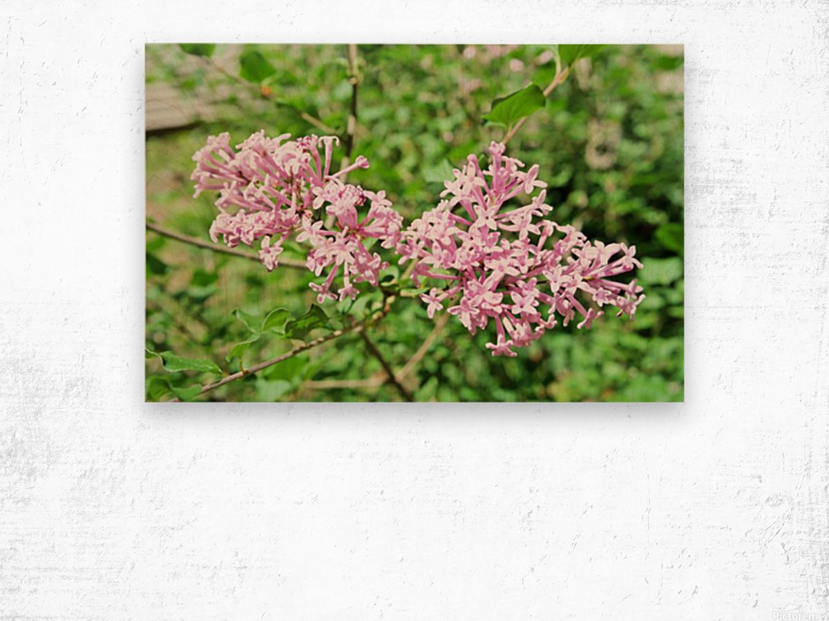 Bright Lilac  Wood print