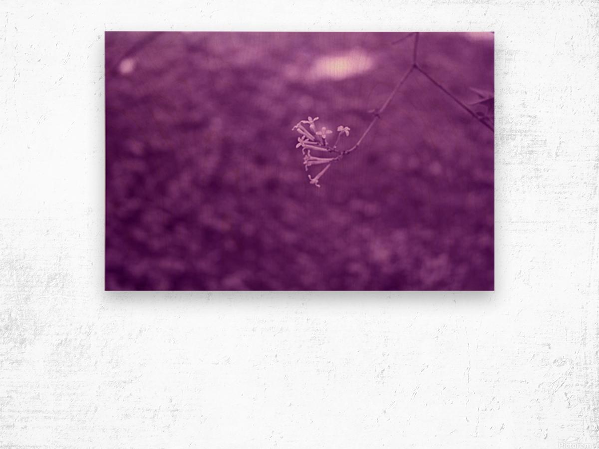 Pretty Bloom Red Violet Wood print