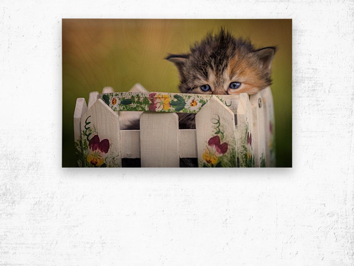 Kitten in basket Wood print